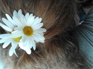 daisys for daisy